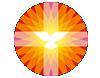 pkn-logo-001